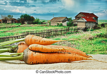 carrots on the background of rural areas