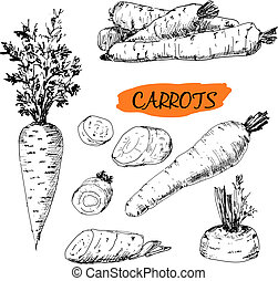 Carrots. Set of hand drawn graphic illustrations