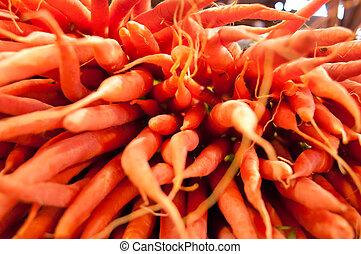 carrots - shallow depth of field