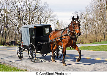 carruaje, amish, caballo