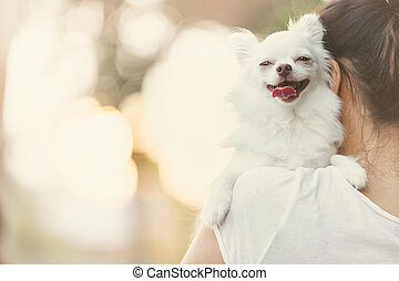 carry dog - Carry on a white chihuahua.