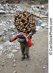 Carrying firewood - Annapurna, Nepal - 20 March 2008. Young...