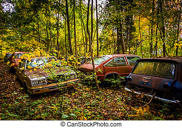 Cars and autumn colors in a junkyard.