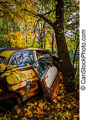 Cars and tree in a junkyard.