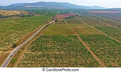 Cars drives on a road through beautiful vineyard fields in the mountains.