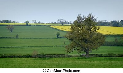 Cars Driving Past Fields In Rural Landscape