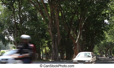 cars go along city road between green trees - GEORGETOWN,...