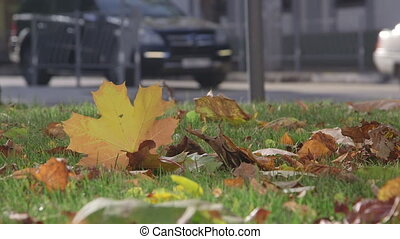 Cars on city street in autumn