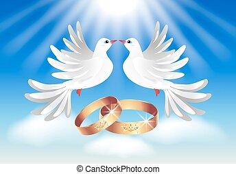 cartão, com, anéis casamento, e, dois, pombas