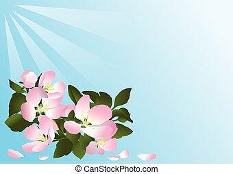 cartão, com, flores, de, macieira