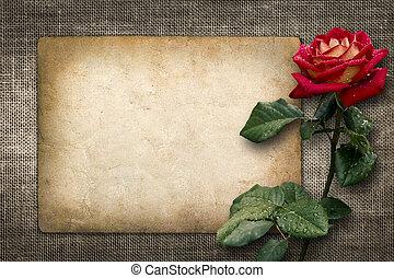cartão, para, convite, ou, parabéns, com, rosa vermelha