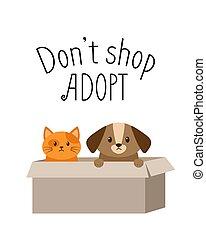 cartón, gatito, sin hogar, caja, perrito