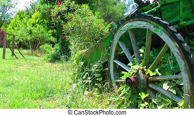 Cart Horse Carrier in Nature