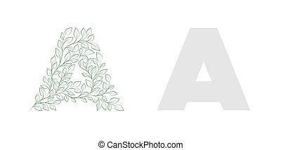 carta, capital