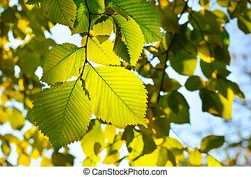 carta da parati, autunno, stagionale