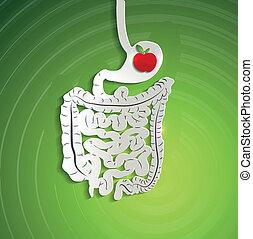 carta, sistema digestivo, e, mela, in, stomaco