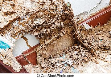 carta, termite, mangiato