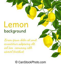 cartaz, limão, fundo