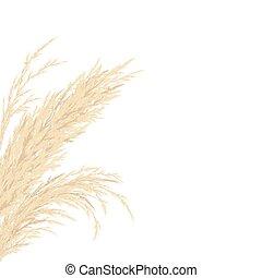 carte, illustration., vecteur, gabarit, copie, gauche, space., herbe, doré, pampas, cadre, argent