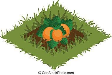 carte, isométrique, tileset, jardin, citrouille, lit, élément, planté, légume, dessin animé
