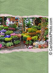 carte postale, déchiré, fleur papier, marché