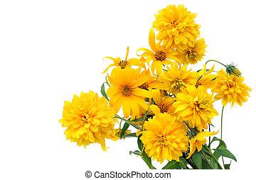 carte postale, fleurs or, isolé