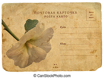 carte postale, mallow., fleur, vieux, fleurir