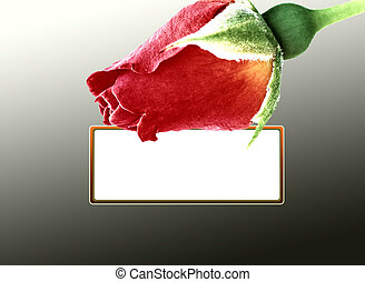 carte, rose, arrière-plan noir, rouges