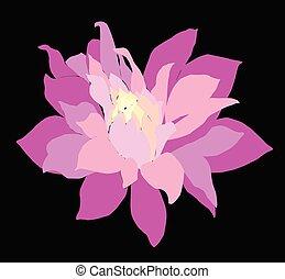 carte, vecteur, décoratif, chrysanthème, fleurs