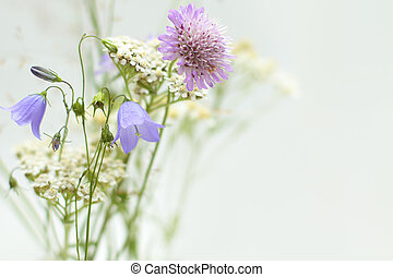 carte, wildflowers, salutation, fond