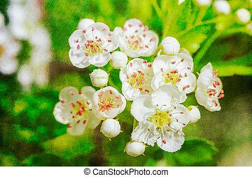 cartolina, stile, fiori, bianco