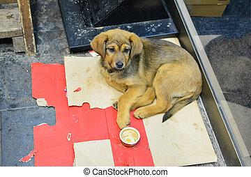 carton, chien, errant, lit, jeune