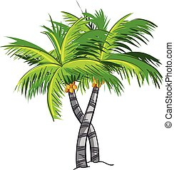 cartone animato, albero noce cocco