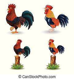 cartone animato, bianco, isolato, fondo, gallo