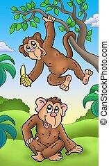 cartone animato, due, scimmie