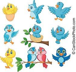 cartone animato, felice, uccelli, collezione, set