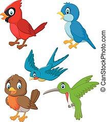 cartone animato, uccelli, collezione, set