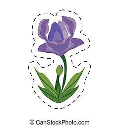 cartoon anemone flower image