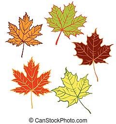 cartoon autumn leaf set