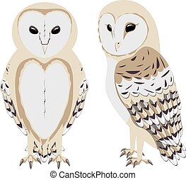 Cartoon Barn Owl - Illustration of cartoon barn owl on white...