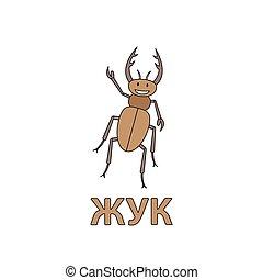 Cartoon Beetle Flashcard for Children