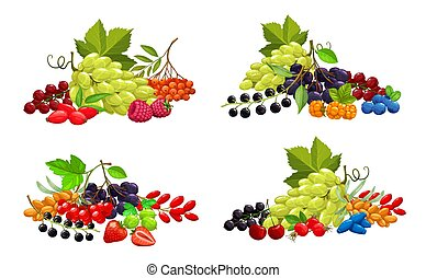 Cartoon berries vector strawberry, bunch of white grape and blackberry, raspberry, cherry, black and red currant with blueberry. berries sea buthorn, honeysuckle and bird cherry, black chokeberry
