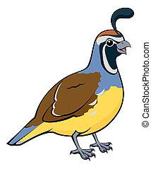 Cartoon California Quail - Cartoon illustration of a male...
