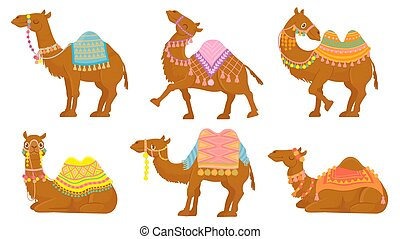 Cartoon camel. Funny desert animals with saddle. Camels vector isolated characters set. Wild Arabian pet