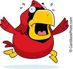 Cartoon Cardinal Panic
