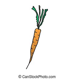Cartoon carrots. Vector illustration. Drawing by hand.