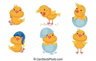 Cartoon Chicken Character Picking Grain and Wearing Sleeping Hat Vector Set