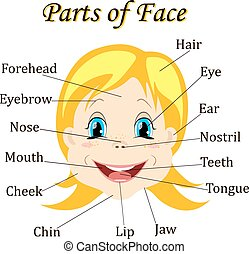 Cartoon child. Girl. Vocabulary of face parts. Vector illustration.