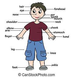 Cartoon child. Vocabulary of body parts. Vector illustration...