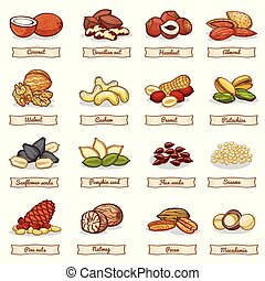 Cartoon color nut and seed grains. Vector collection